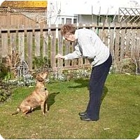 Adopt A Pet :: Abby - Adoption Pending - Vancouver, BC