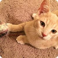 Adopt A Pet :: Rosco - Chesterfield Township, MI