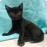 Adopt A Pet :: Natasha - Reston, VA