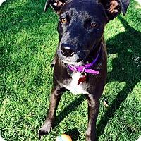 Adopt A Pet :: Tilly - Scottsdale, AZ