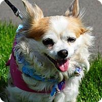 Adopt A Pet :: Lizzie - Osseo, MN