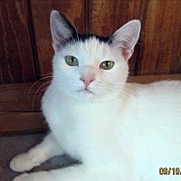 Adopt A Pet :: Bailey - Pasadena, CA