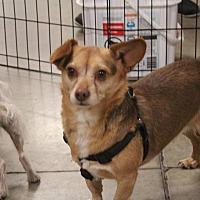 Adopt A Pet :: Big Bear - Rosamond, CA