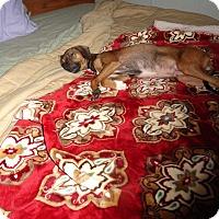 Adopt A Pet :: SALLY - Loveland, CO