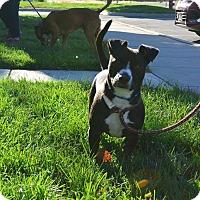 Adopt A Pet :: Gus - Meridian, ID