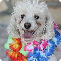 Adopt A Pet :: Jeffrey - Canoga Park, CA