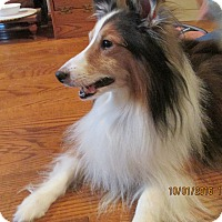 Adopt A Pet :: Dusty 2 (Adopted) - New Castle, PA