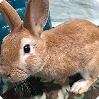 Adopt A Pet :: Kingston - Woburn, MA
