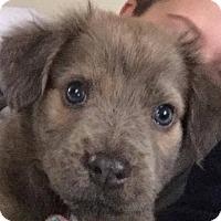 Adopt A Pet :: Tobie - Bernardston, MA