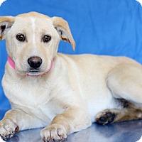 Adopt A Pet :: Taffy - Waldorf, MD