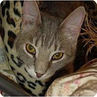 Adopt A Pet :: Popper - Chesapeake, VA