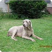 Adopt A Pet :: Boogaloo - Attica, NY