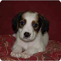 Adopt A Pet :: Patches - Chula Vista, CA