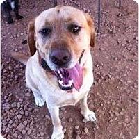 Adopt A Pet :: Tucker - Cumming, GA