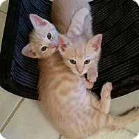 Adopt A Pet :: Marshall - Richmond, VA
