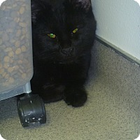 Adopt A Pet :: Jinx - Hamburg, NY