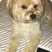 Adopt A Pet :: Elvis - Lorain, OH