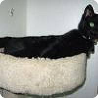 Adopt A Pet :: Nema - Powell, OH