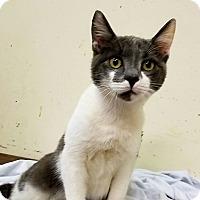 Adopt A Pet :: Debo - Trevose, PA