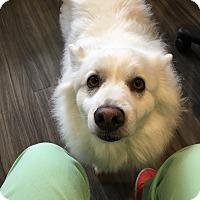 Adopt A Pet :: Snowby - Paducah, KY