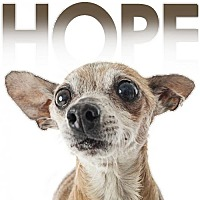 Adopt A Pet :: Hope - Fullerton, CA