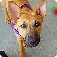 Adopt A Pet :: Buttercup - Decatur, GA