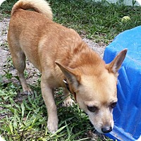 Adopt A Pet :: Cody - Fort Myers, FL