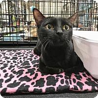 Adopt A Pet :: Minnie - McKinney, TX