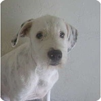Adopt A Pet :: Kenny - Winter Haven, FL