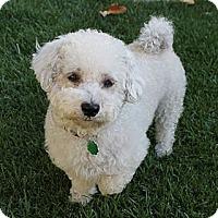 Adopt A Pet :: Mazie - La Habra Heights, CA