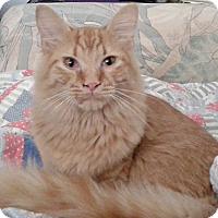 Adopt A Pet :: Petey - Seminole, FL