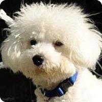 Adopt A Pet :: Fitz - La Costa, CA