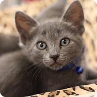 Adopt A Pet :: Desmond - Sacramento, CA