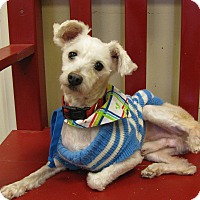 Adopt A Pet :: Calvin - Groton, MA