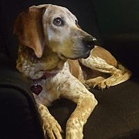 Adopt A Pet :: Colette - Livonia, MI