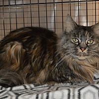 Adopt A Pet :: Allie - Colville, WA