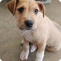 Adopt A Pet :: Finnegan - Newcastle, OK