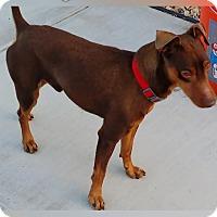 Adopt A Pet :: Kaiser - Oceanside, CA