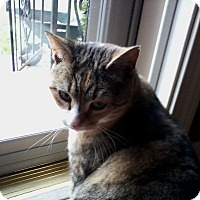 Adopt A Pet :: Leah - Acushnet, MA