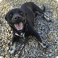 Adopt A Pet :: Pilot - Surprise, AZ