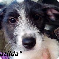 Adopt A Pet :: Bundle of cuties - females - El Cajon, CA