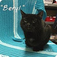 Adopt A Pet :: Beryl - Ocean City, NJ
