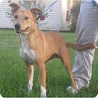 Adopt A Pet :: Savanah - Jacksonville, FL