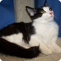 Adopt A Pet :: K-Kolb2-Taffy - Colorado Springs, CO
