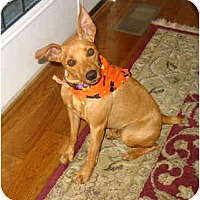 Adopt A Pet :: Lacy - Nashville, TN
