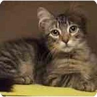 Adopt A Pet :: BJ - Arlington, VA