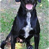 Adopt A Pet :: Denver - Chicago, IL