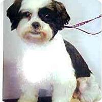 Adopt A Pet :: Molly - Mays Landing, NJ