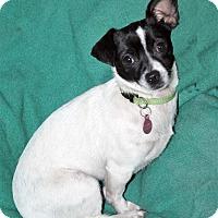 Adopt A Pet :: Mindy - San Francisco, CA