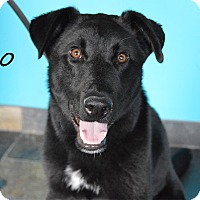 Adopt A Pet :: Dino *Coming Soon* - Chicago, IL